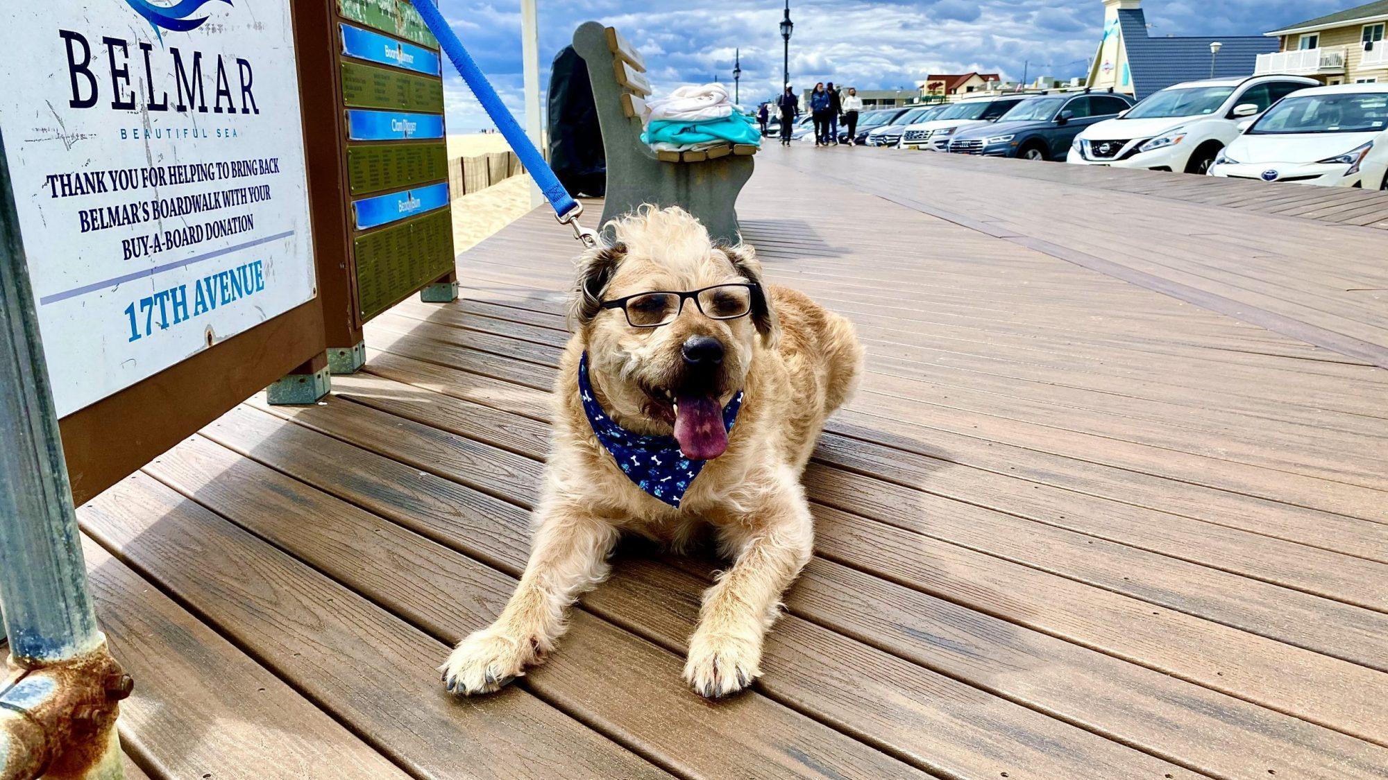 Dexter Dog on Belmar Boardwalk