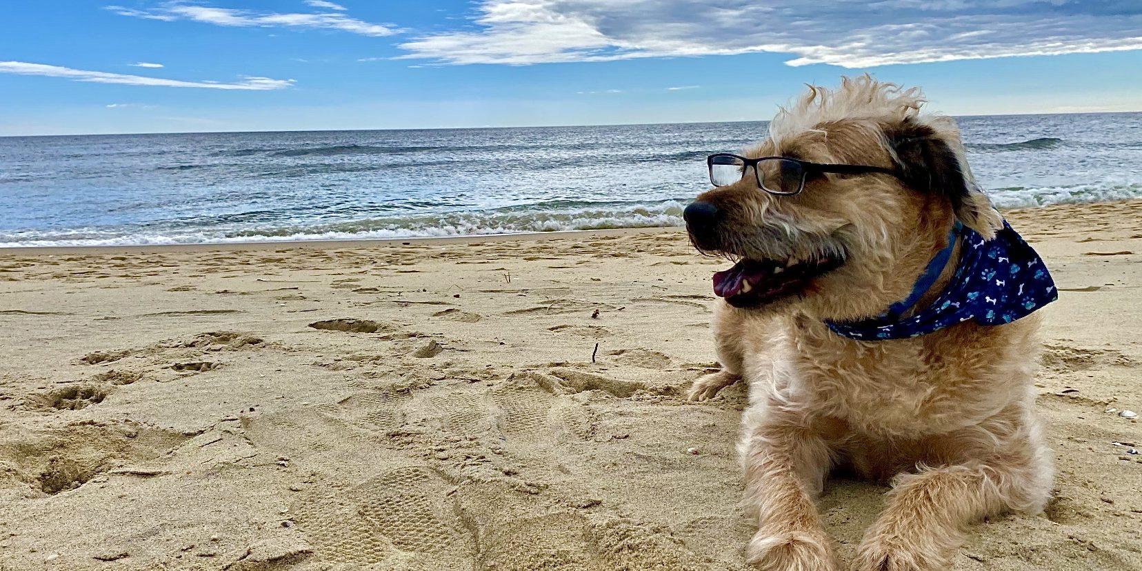 Dexter Dog on beach at Jersey Shore